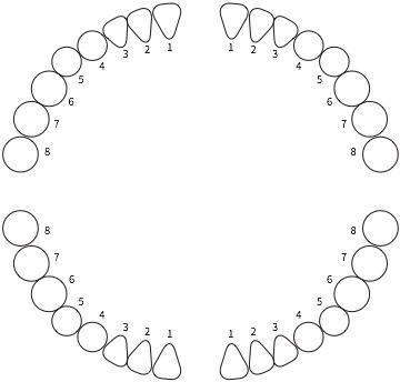 dental2_7_1
